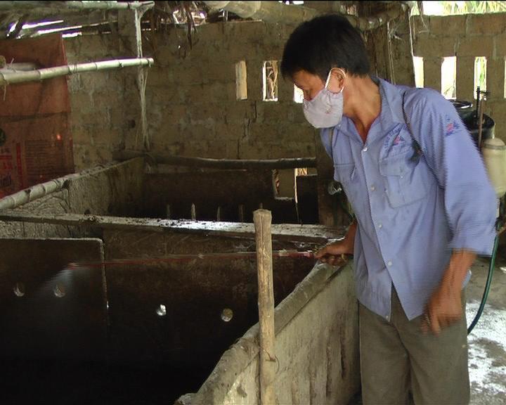 Cẩm Vĩnh: Chủ động phòng chống dịch tai xanh ở lợn