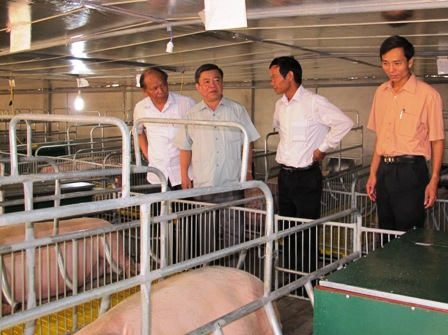 Chủ tịch UBND tỉnh Võ Kim Cự cùng Đoàn công tác kiểm tra mô hình nuôi lợn nái ngoại cấp bố mẹ có quy mô 450 con và 1.200 con lợn thương phẩm tại HTX Phú Sơn, xã Ân Phú (Ảnh Ngô Thắng)