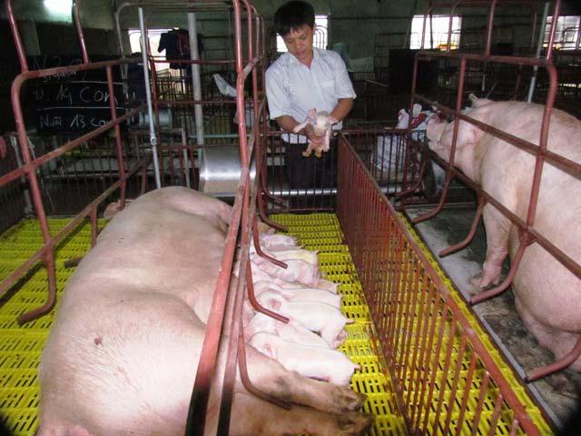 Xây dựng nông thôn mới ở Hà Tĩnh: Tìm cách giảm áp lực đóng góp cho dân